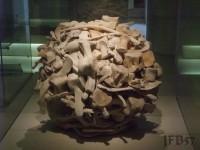 prehistoric bones