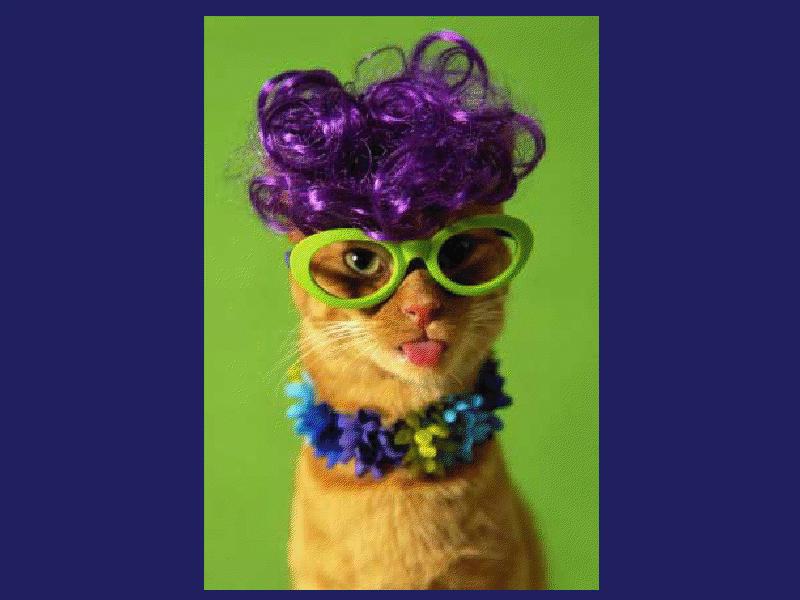 crazy grandma mum cat purple hair